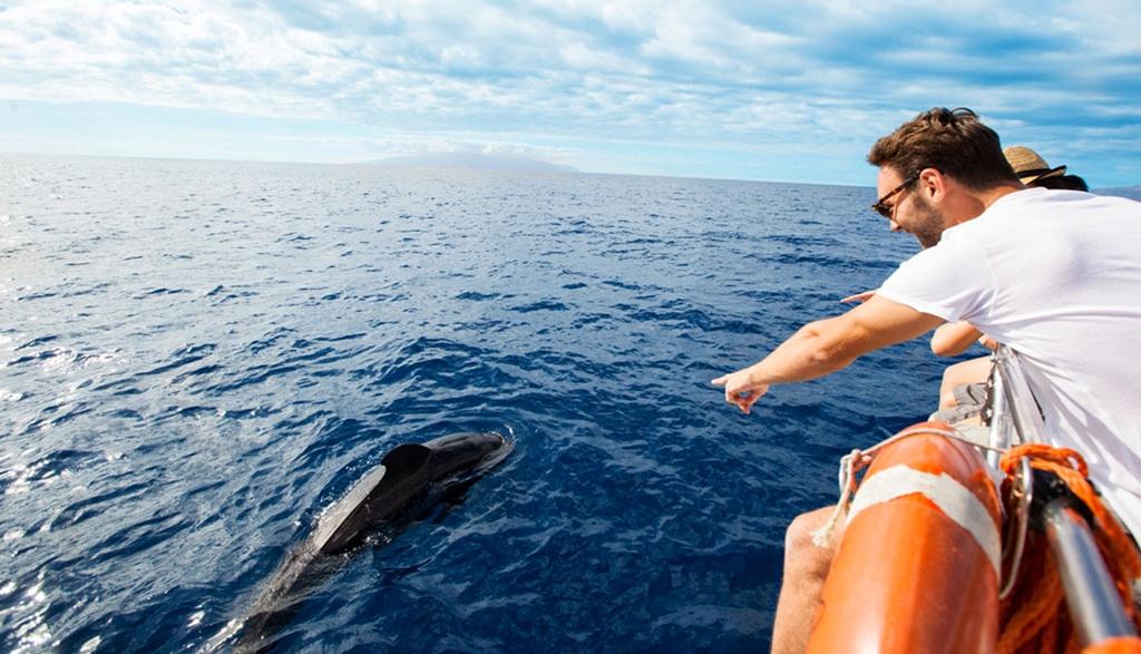 Portada cetaceos-1