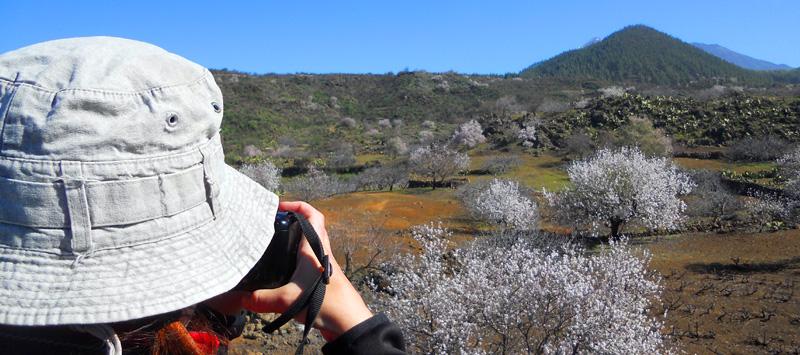 Almendros en flor turistica
