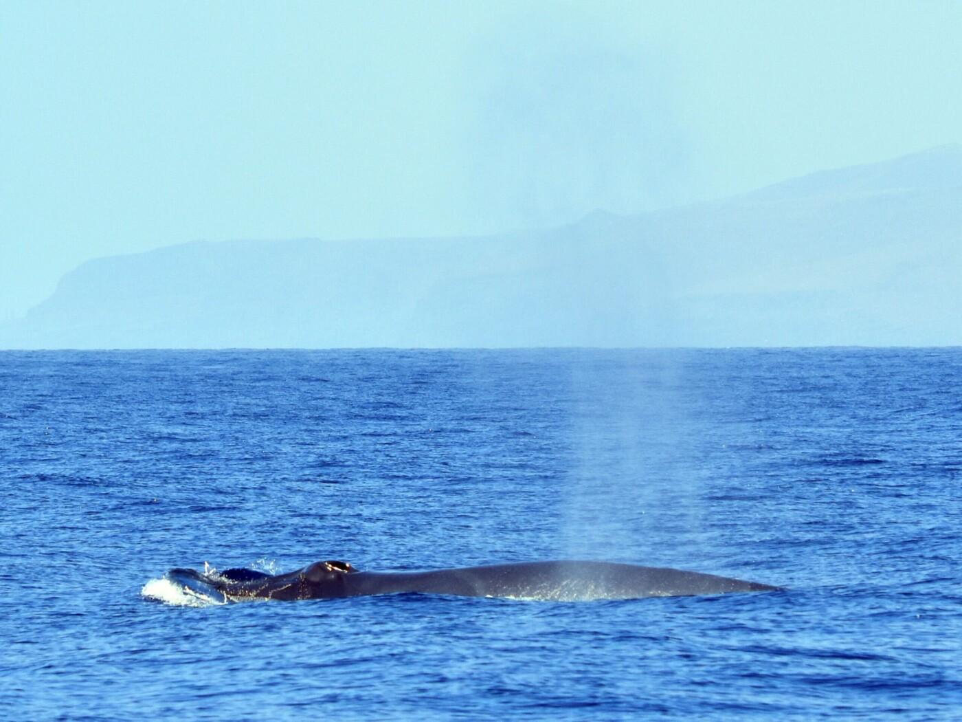 Ballenas y delfines 77f53129-df8c-4bd4-83c2-c00a4a91276c