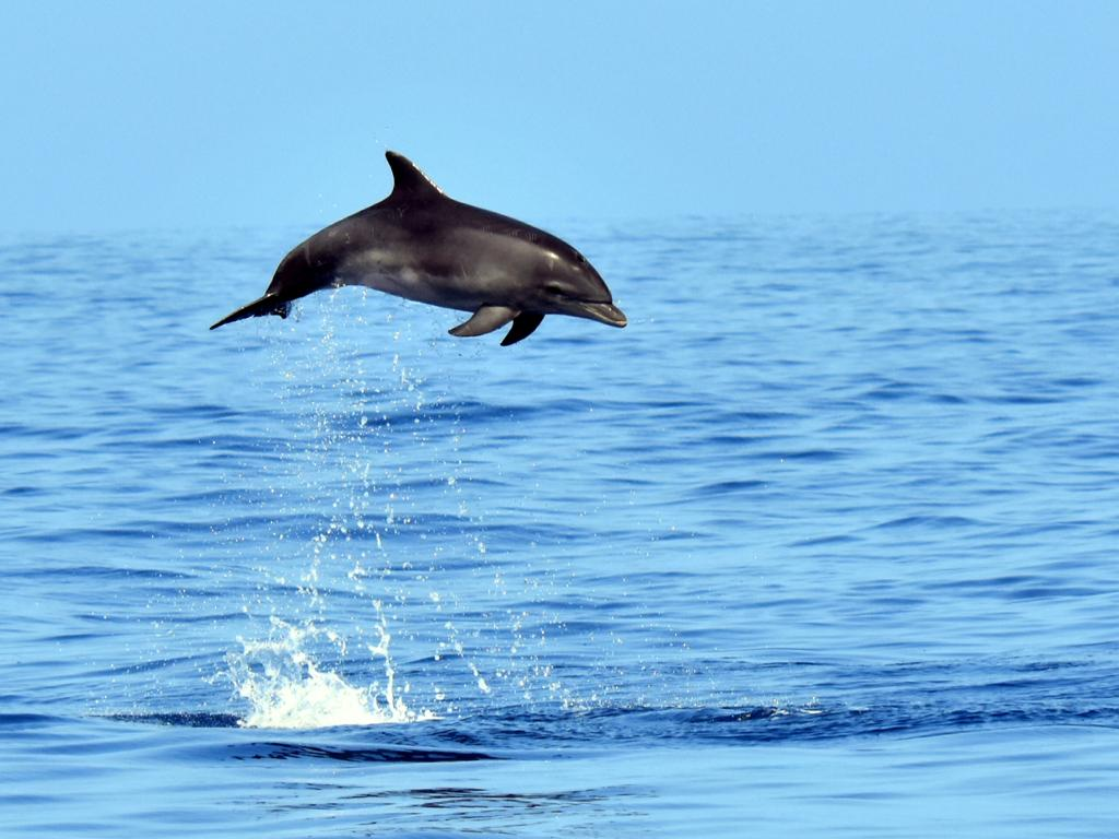Ballenas y delfines 939ac87e-5aef-4c76-a3bc-c80a1ca87f1e
