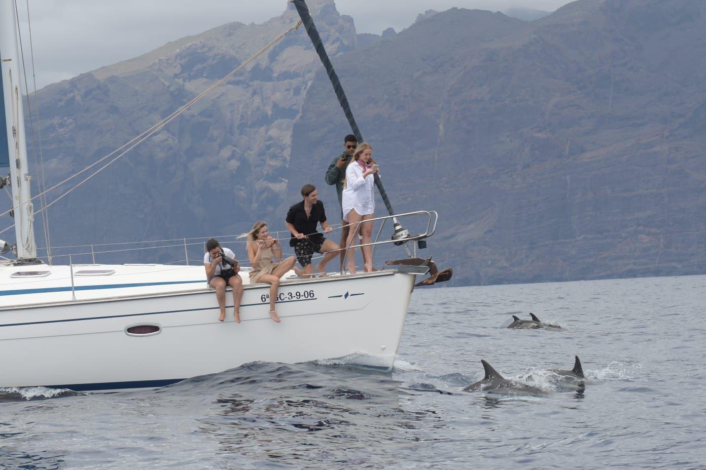 Ballenas y delfines ca06c62a-f89f-429c-82f4-459e7e8f4eea