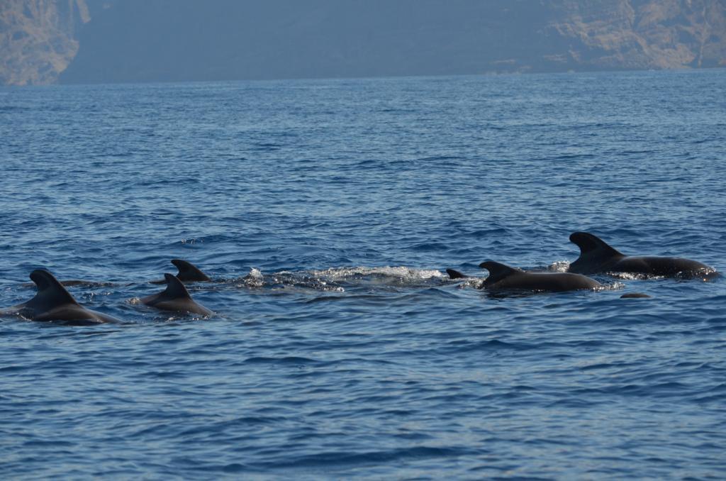 Ballenas y delfines f4ae2037-afaa-4b40-9525-a2ce28c3b3ba